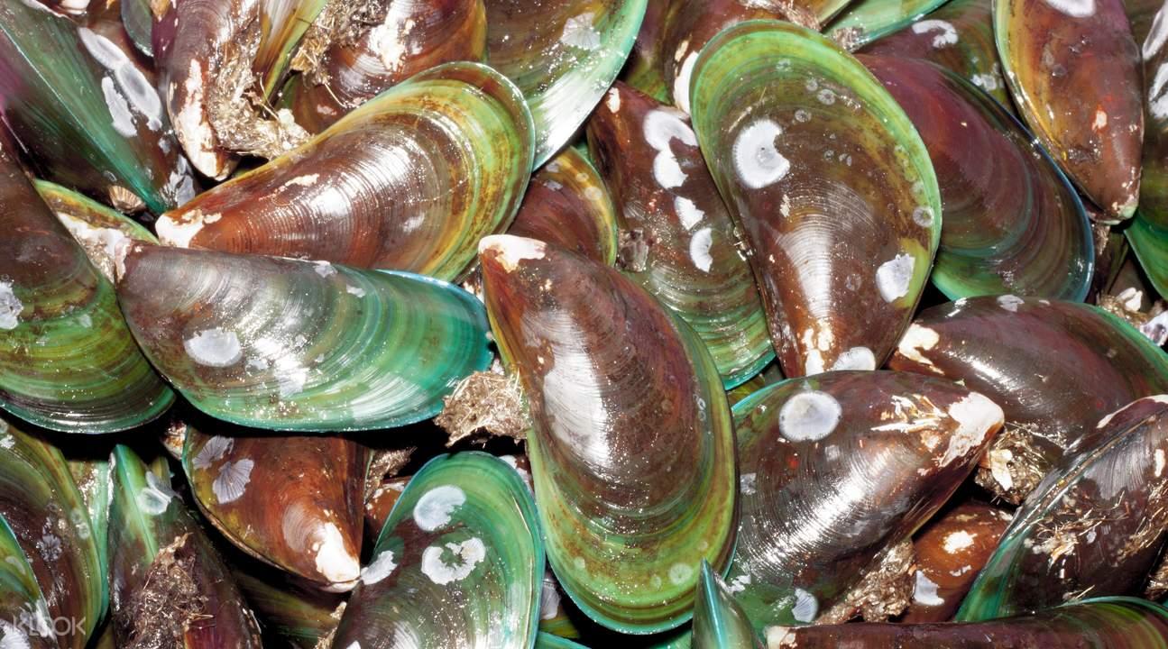 mussel farm marlborough tour