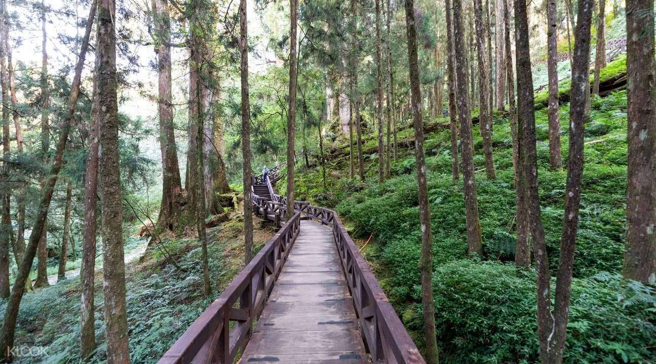 漫步在山林之中