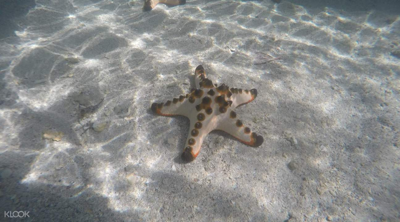 star fish in port barton