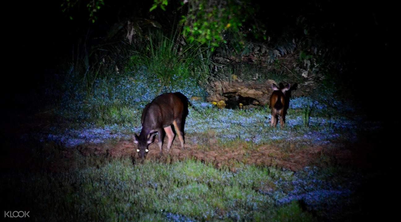 Taman Negara National Park Overnight Tours - Klook Malaysia