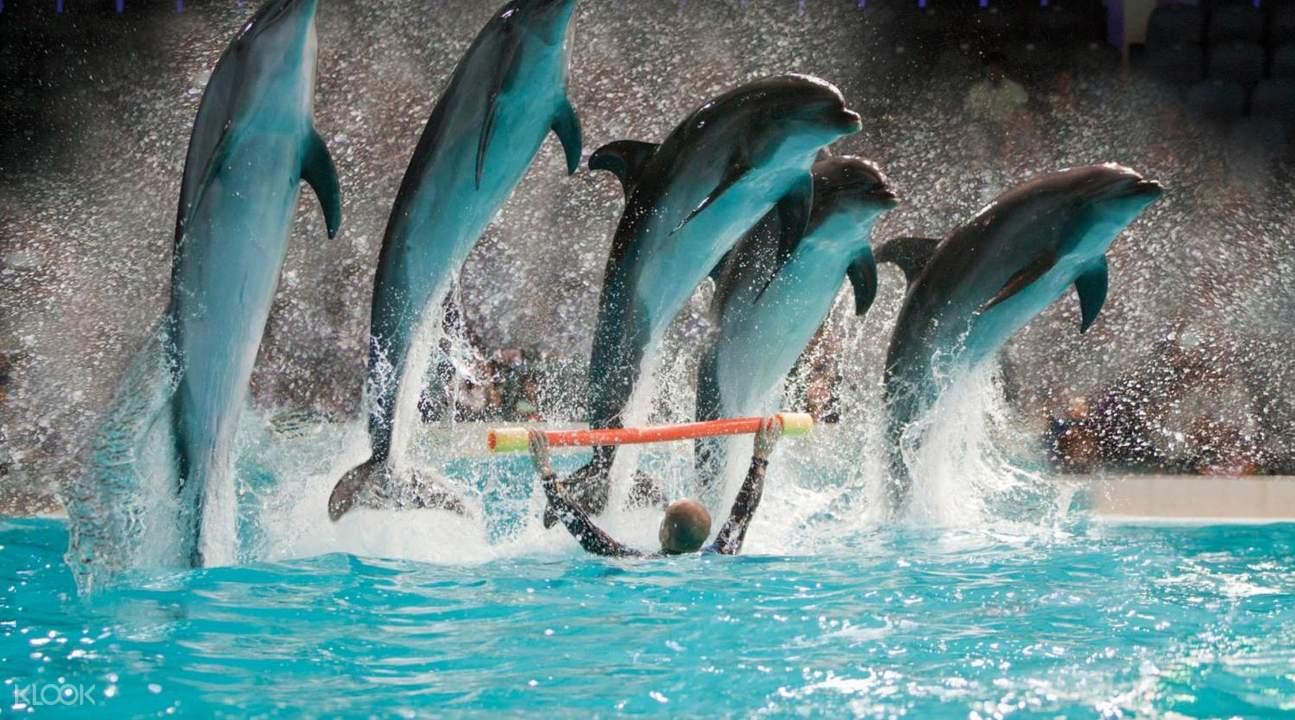 Dubai Dolphin Show