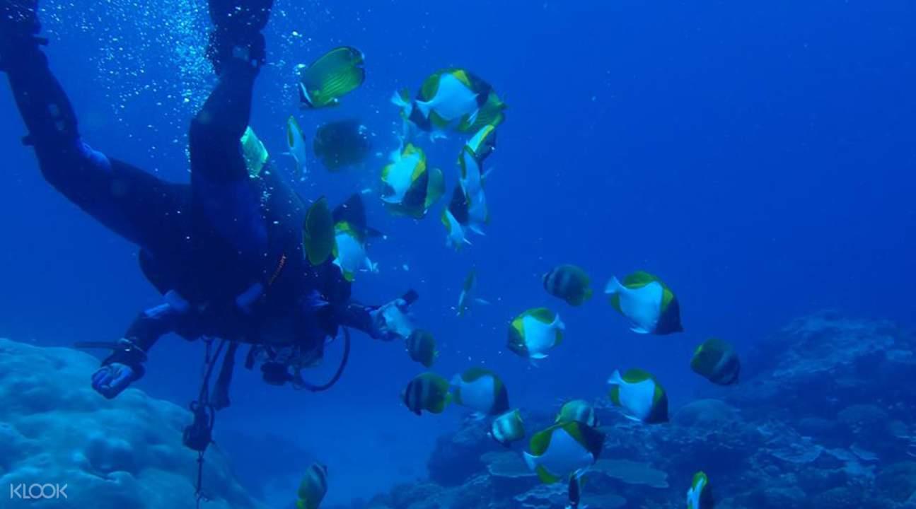 綠島乘船潛水