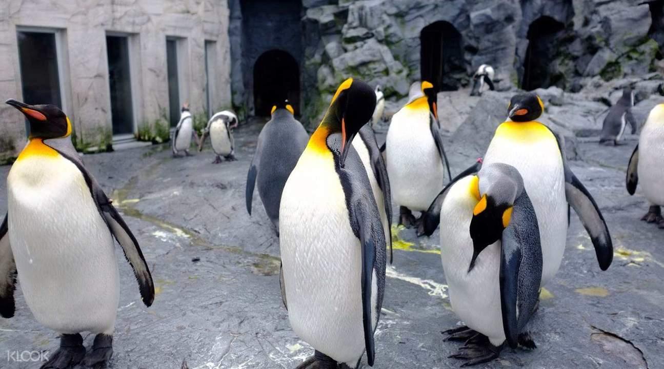 旭山动物园门票