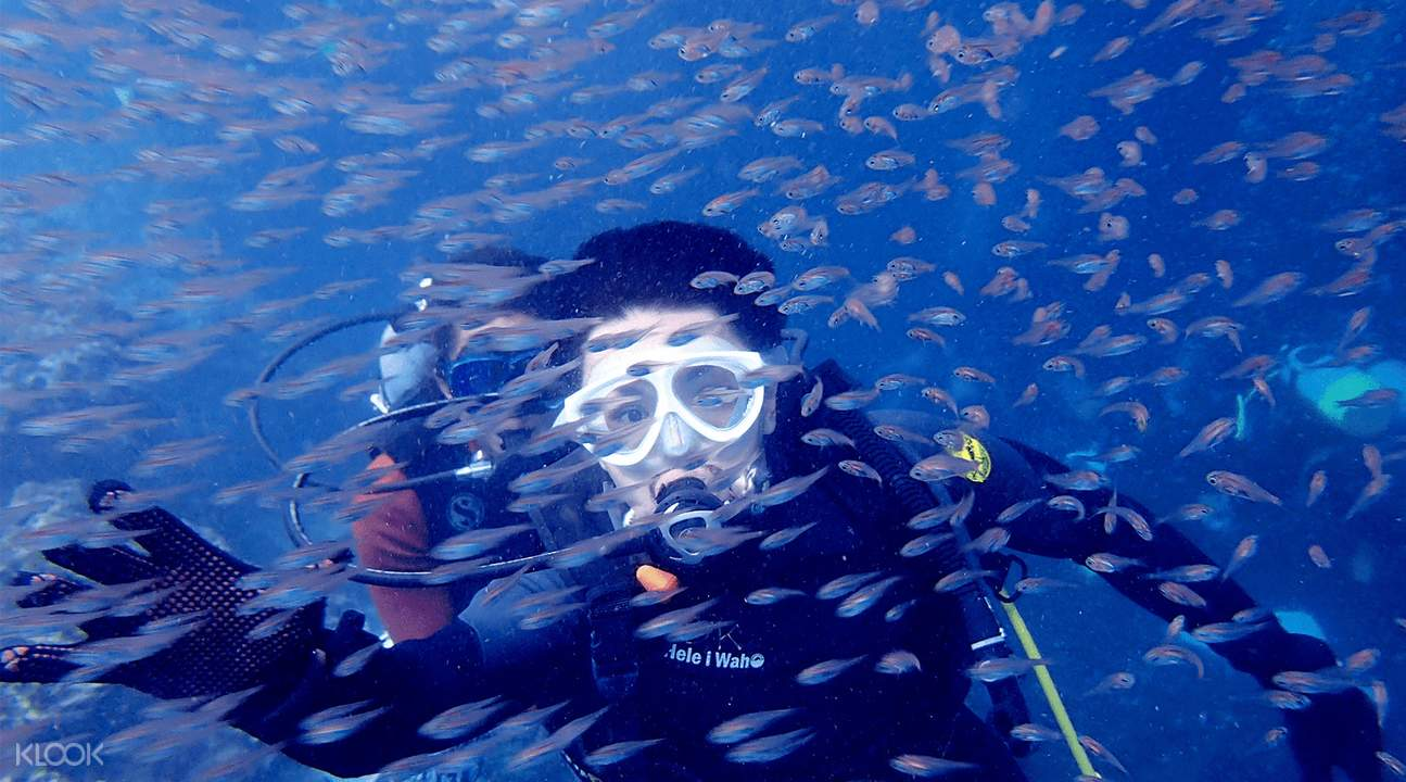 person snorkeling surrounded by fishes in the blue cave, okinawa