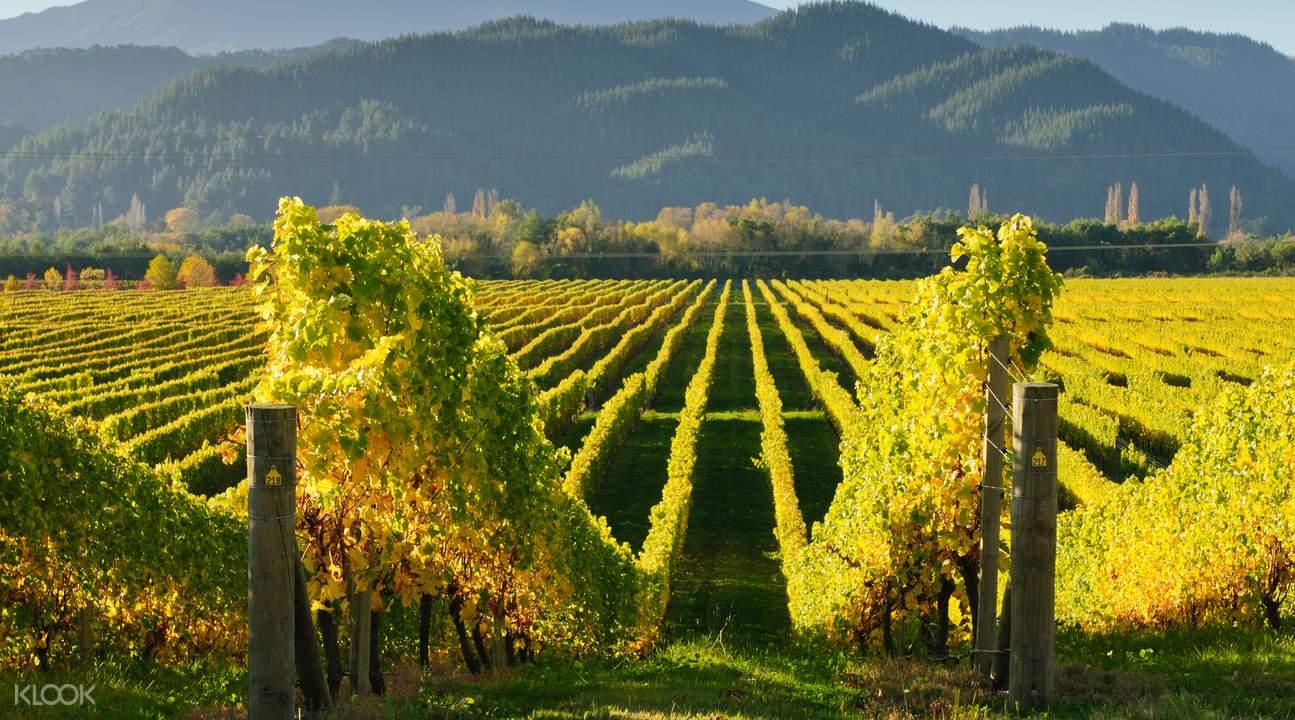 marlborough vineyards tour