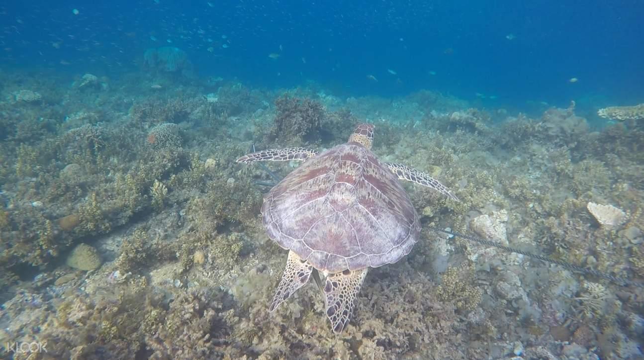 sea turtle in port barton