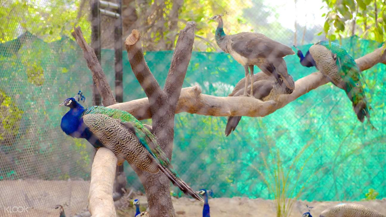 hyderabad zoological park