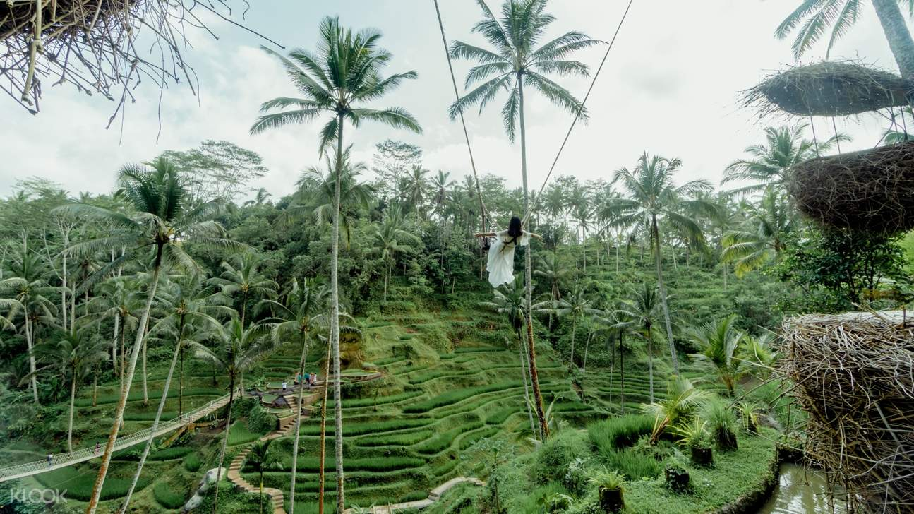 swing in tegalalang rice terraces