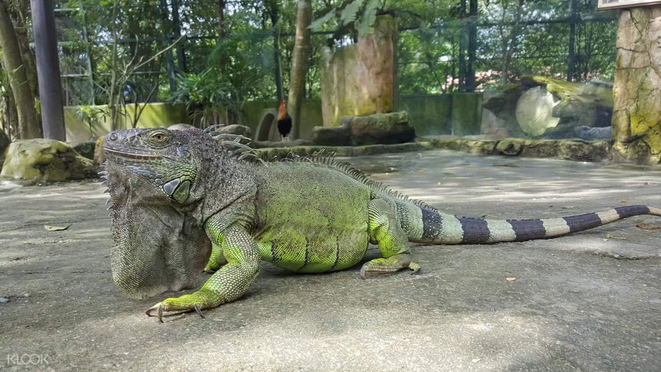 吉隆坡動物園,城の農場,城之農場,吉隆坡一日遊,吉隆坡親子,吉隆坡羊駝,動物園農場