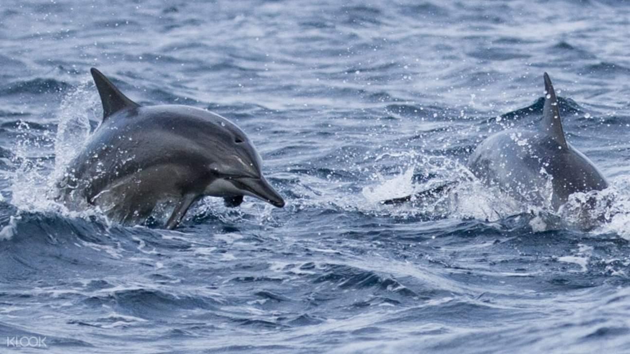 mirissa dolphin watching