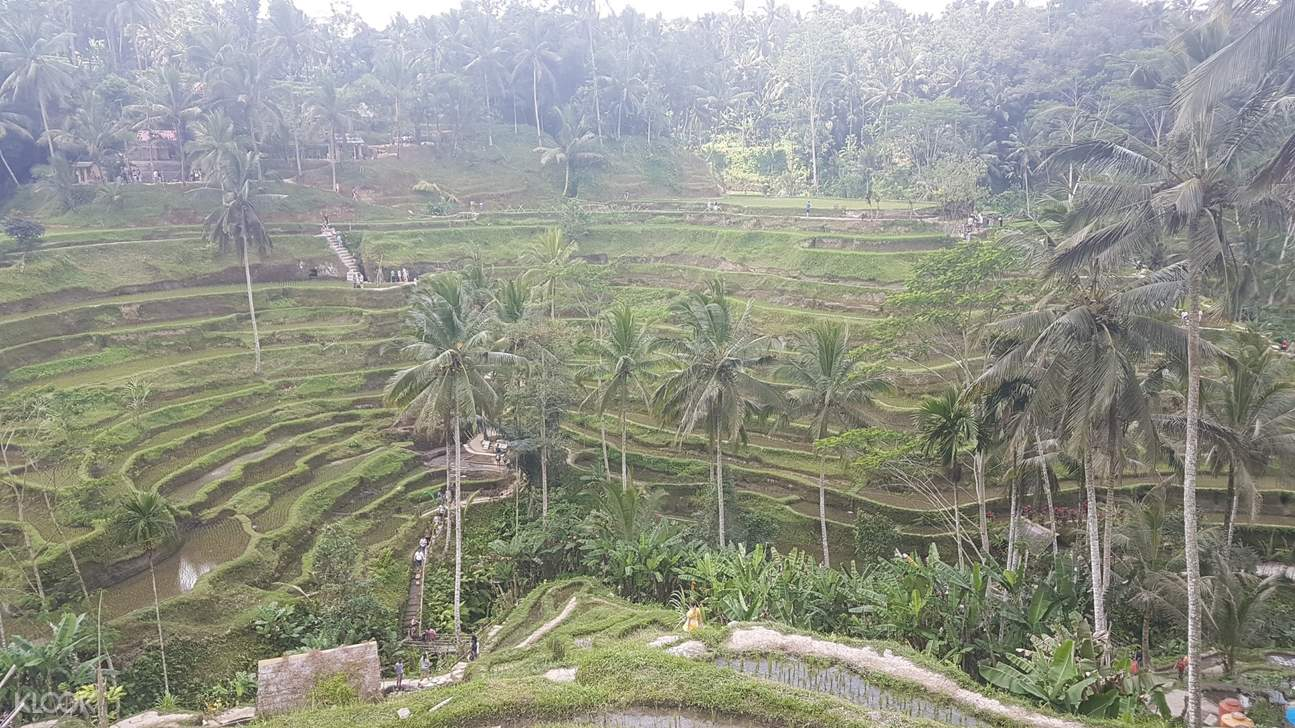 rice terraces view in bali