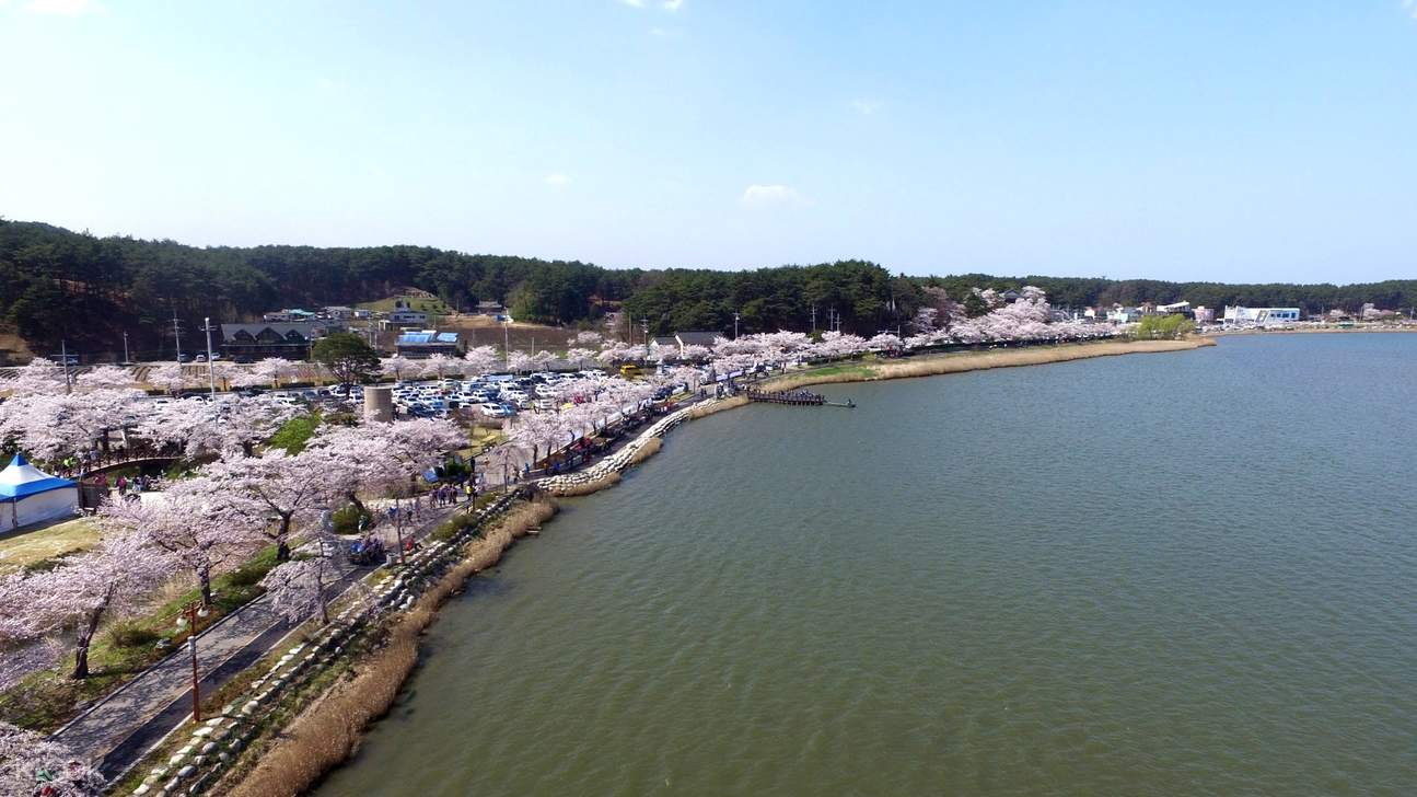 镜浦台赏樱,正东津海洋列车,江陵海滨,鬼怪拍摄地,注文津海边