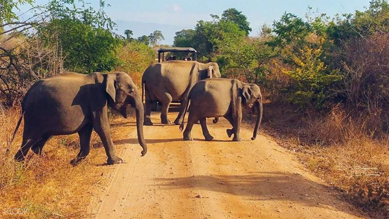 Elephant herd along the road