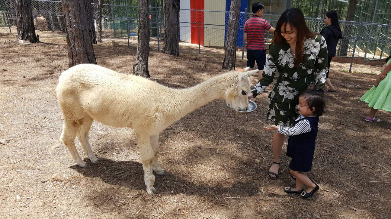llama zoodoo zoo and cafe da lat