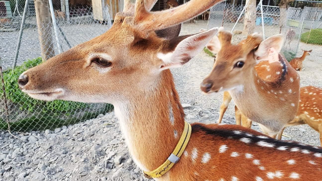 Paradise of Deer Kenting