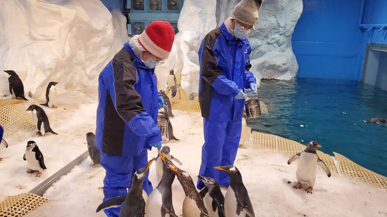 我與企鵝的0.1毫米
