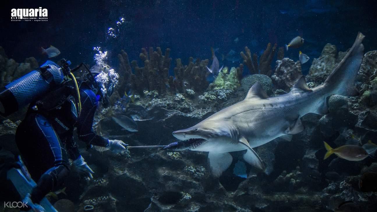 diver feeding sharks at Aquaria KLCC