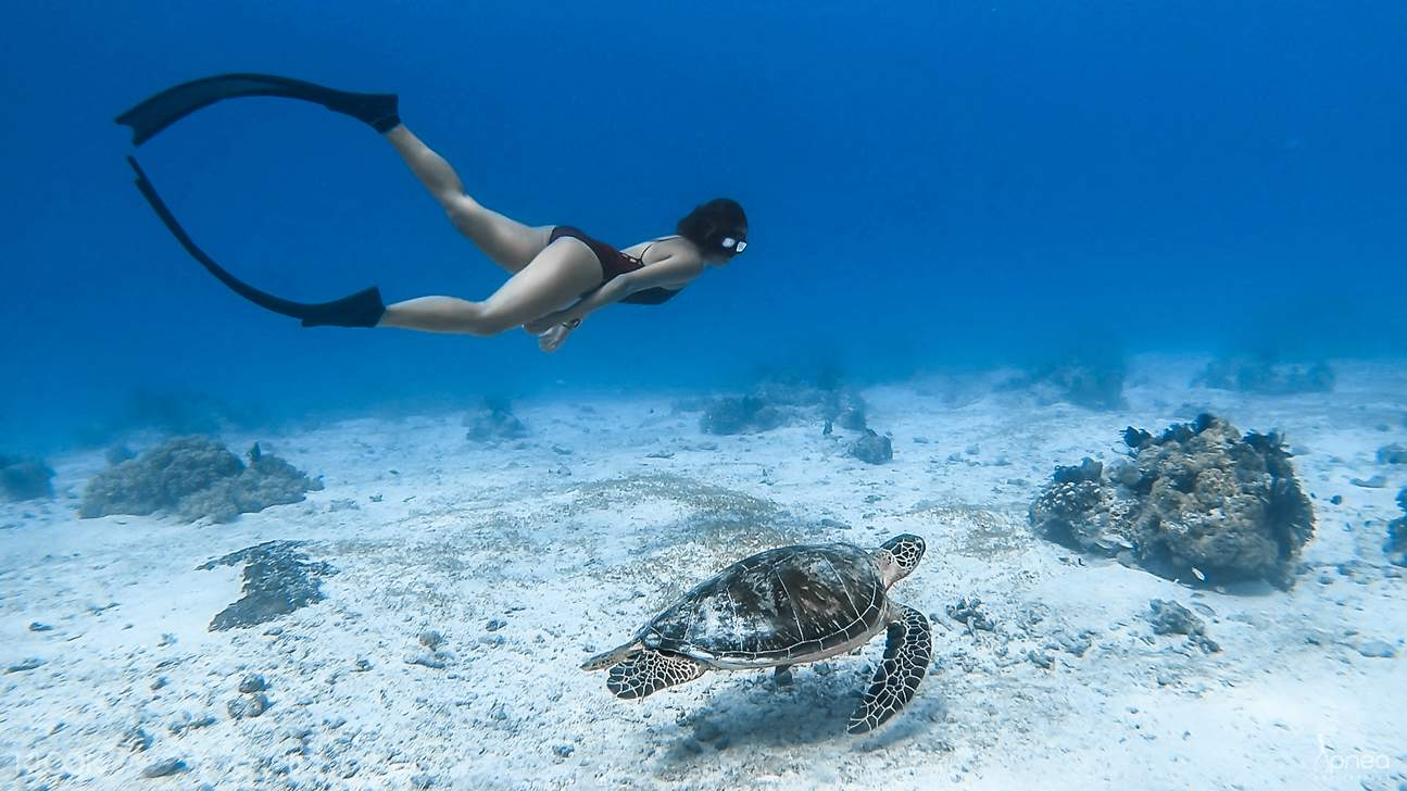Freediving with sea turtle