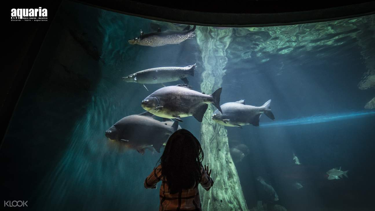 girl looking at fishes at Aquaria KLCC