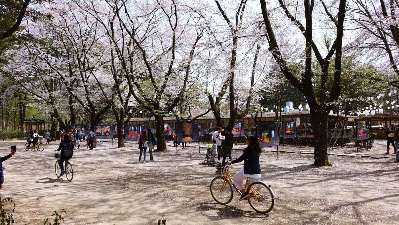 nami island during spring