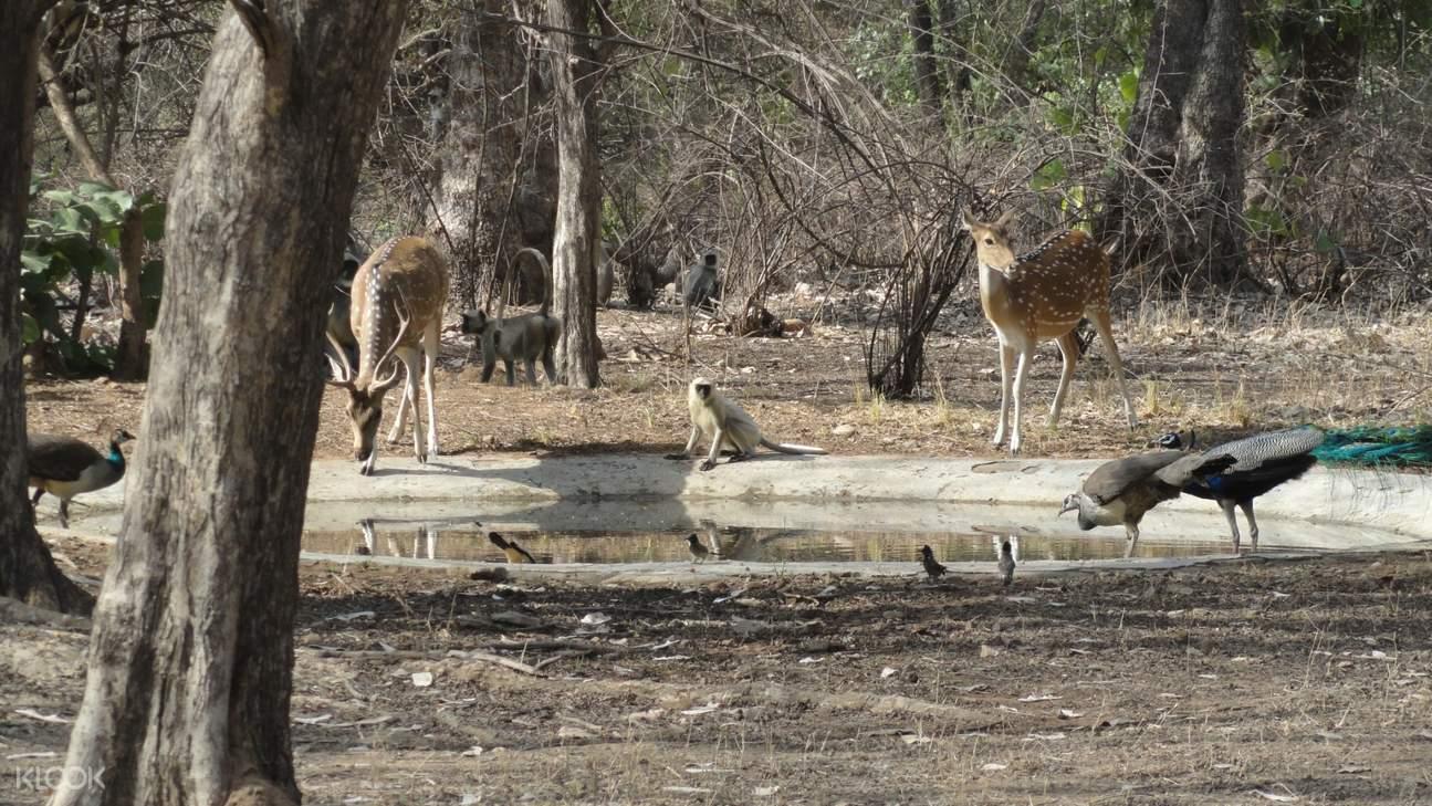 wild animals at Ranthambore National Park