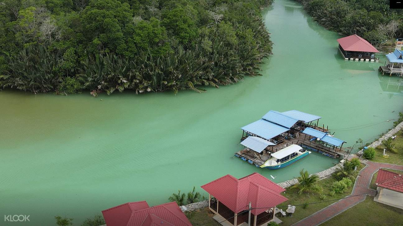 Sea green waters around the mangrove forest