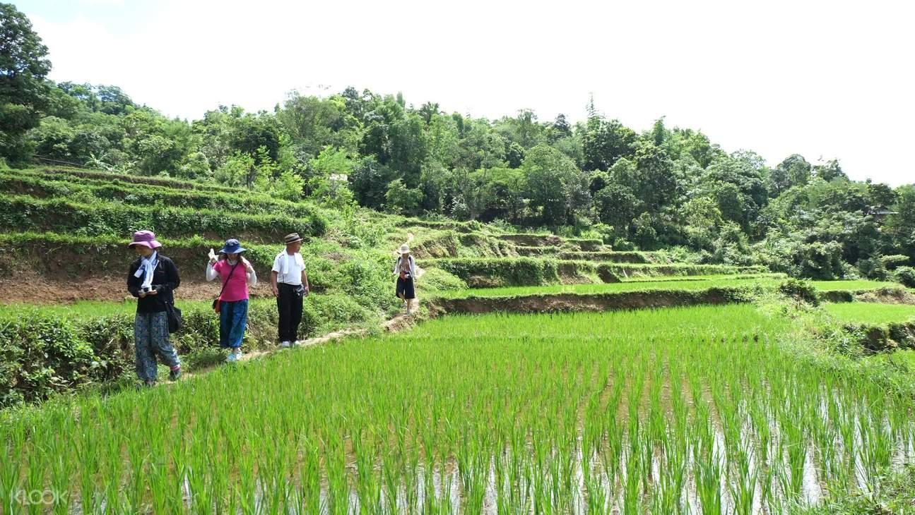 Mai Chau Rice Fields at Mai Chau and Na Phon Village Day Tour by Bus from Hanoi
