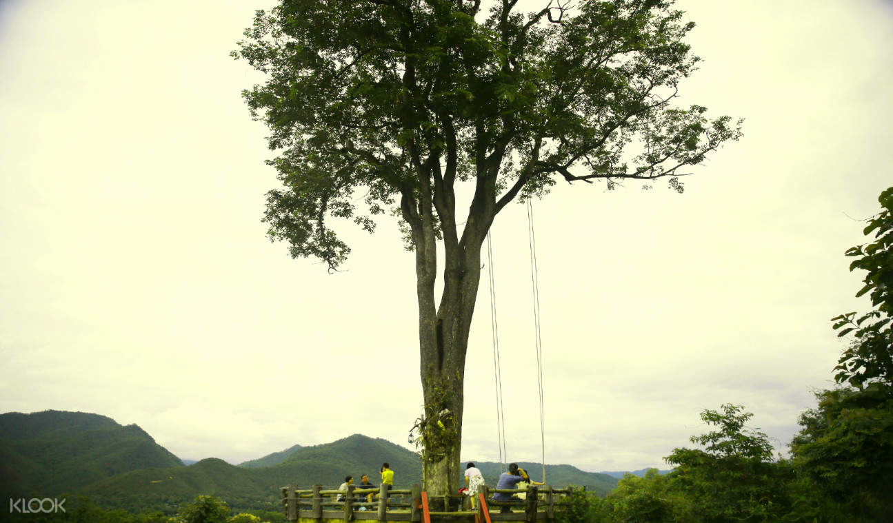 泰國清邁拜縣大樹鞦韆