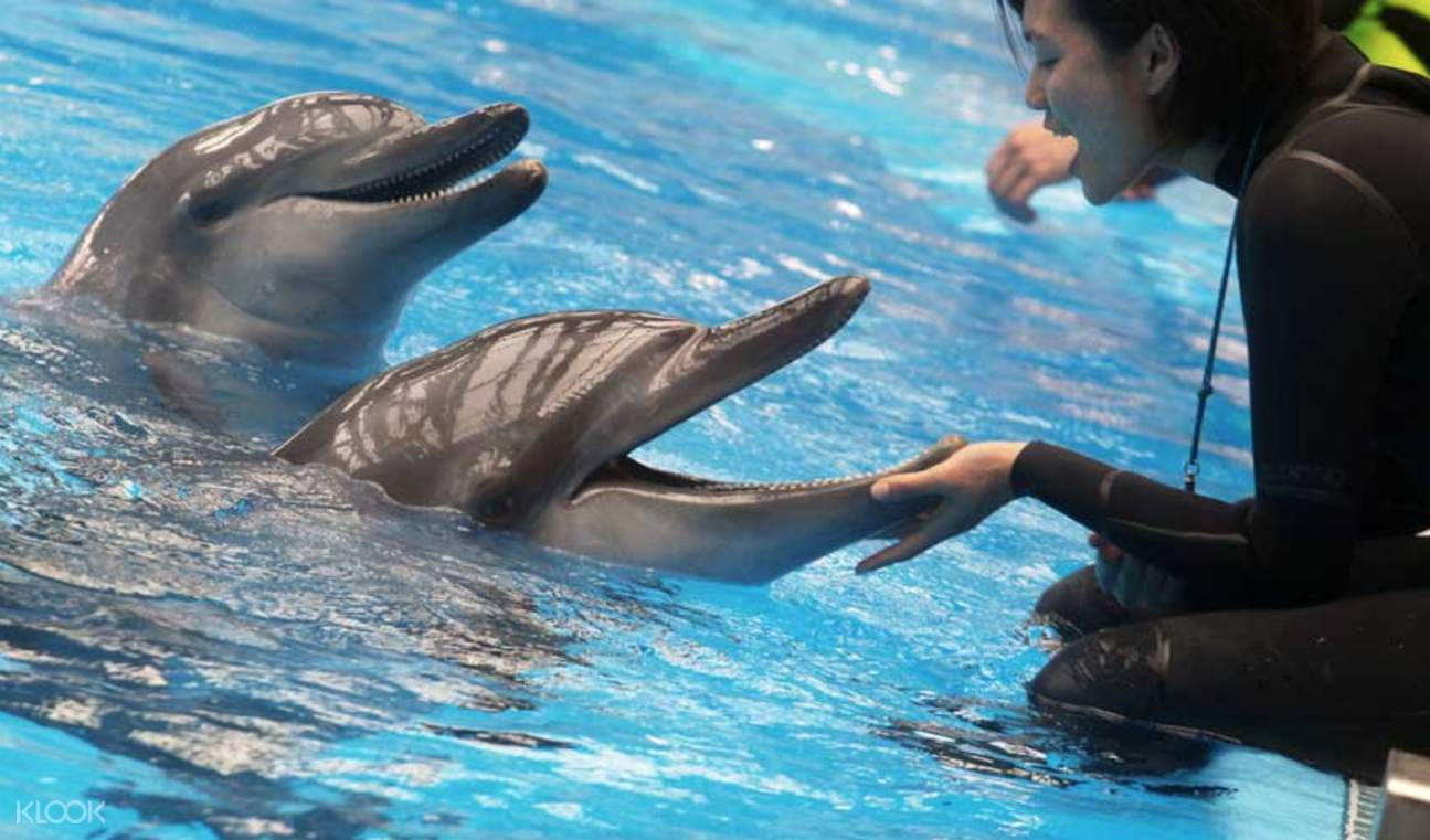 dubai dolphinarium dolphin experience