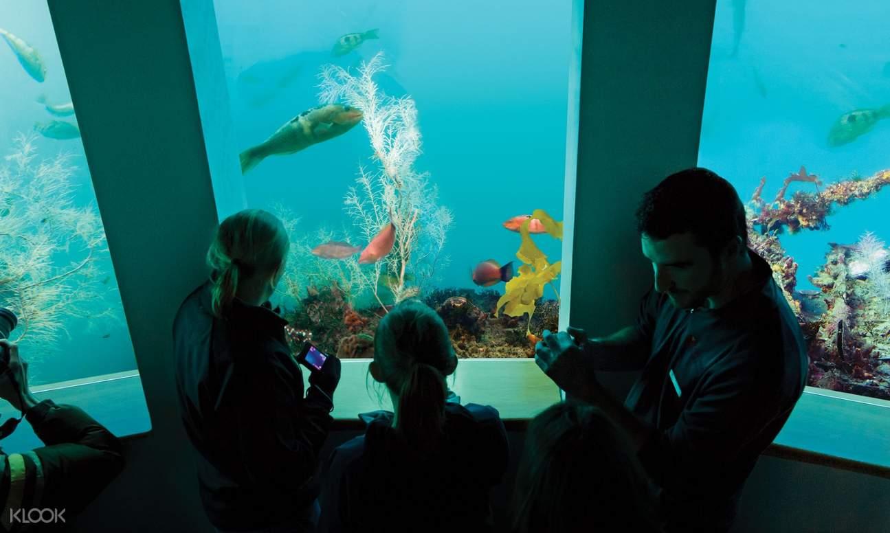 milford sound underwater observatory new zealand