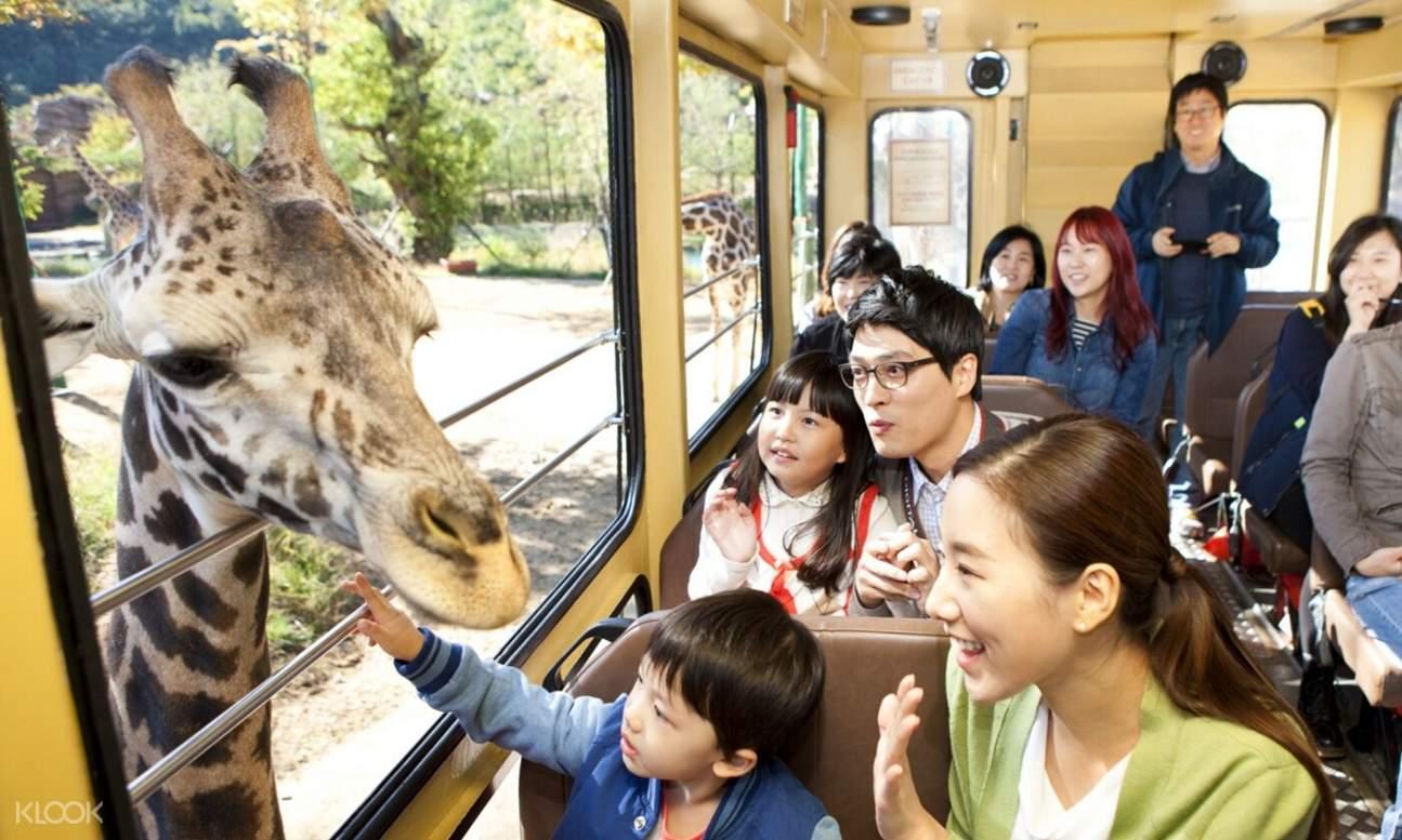 Everland Korea Animals