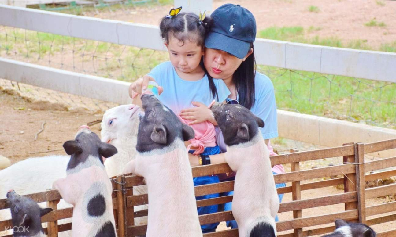 a kid and a woman feeding the sheep in Pattaya Sheep Farm