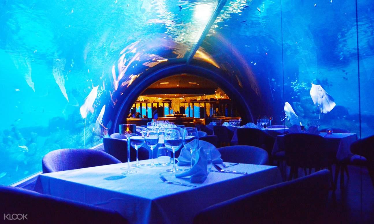 table below the aquarium tanks