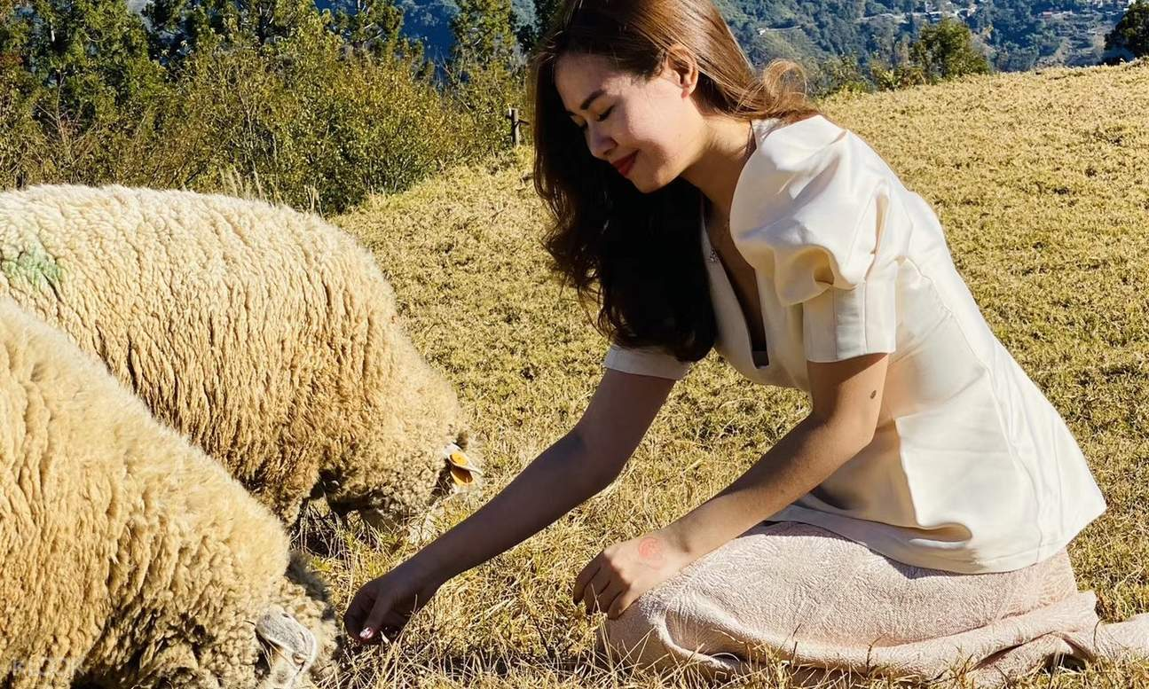 woman interacting with sheep