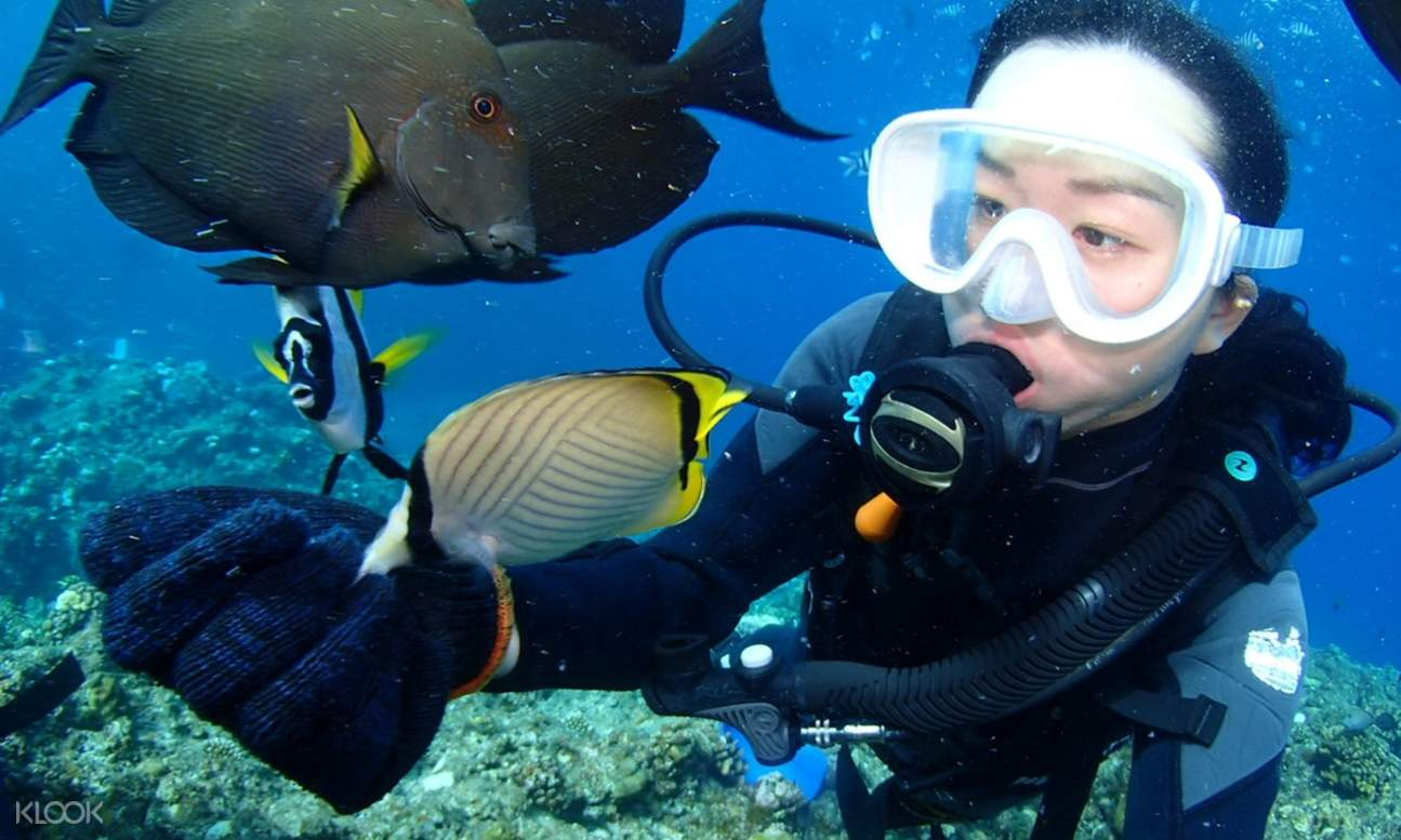 girl snorkeling with fishes in okinawa