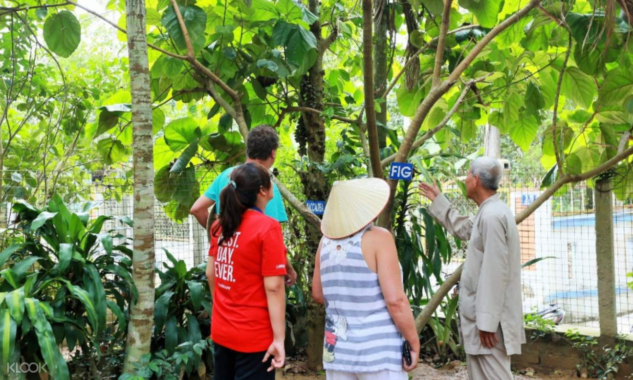 local man showing tourists a fig tree