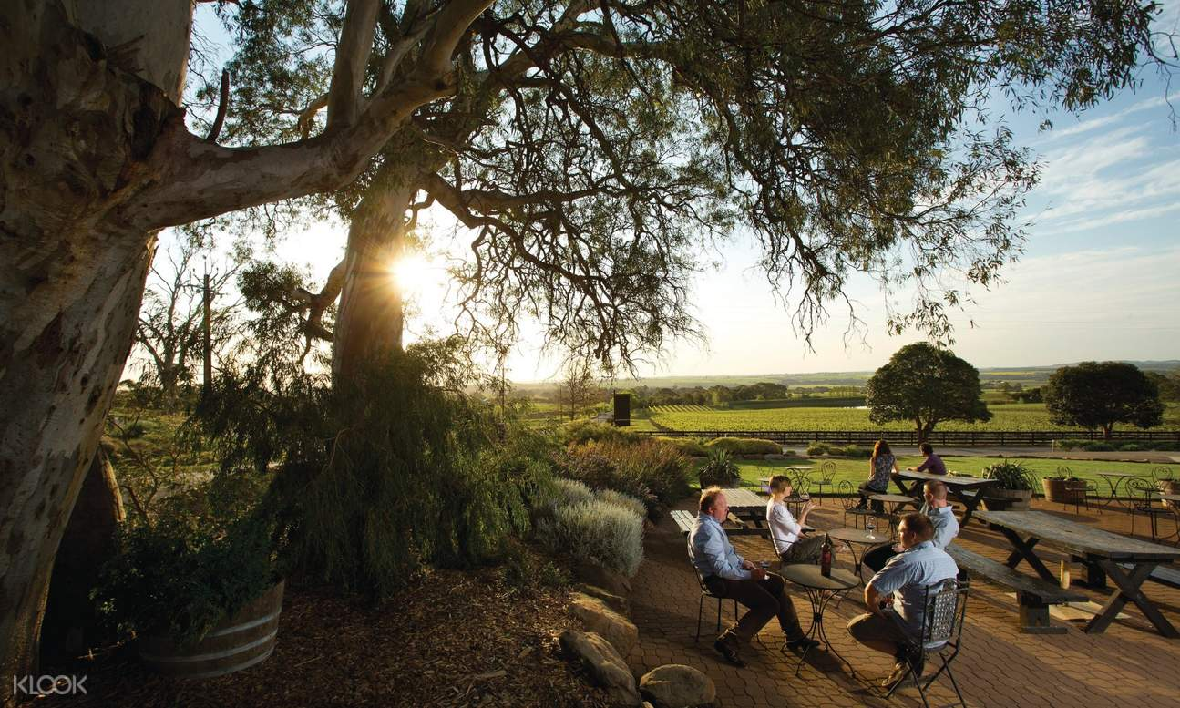 group of people drinking wine under the shade of a tree