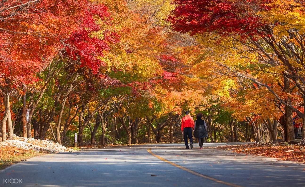 Naejangsan National Park day tour
