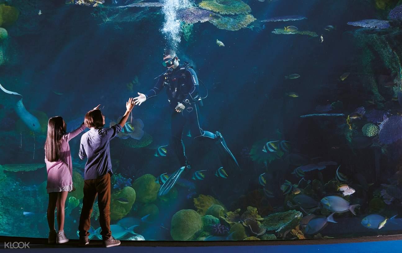 divers feeding fish aquarium windows ocean world