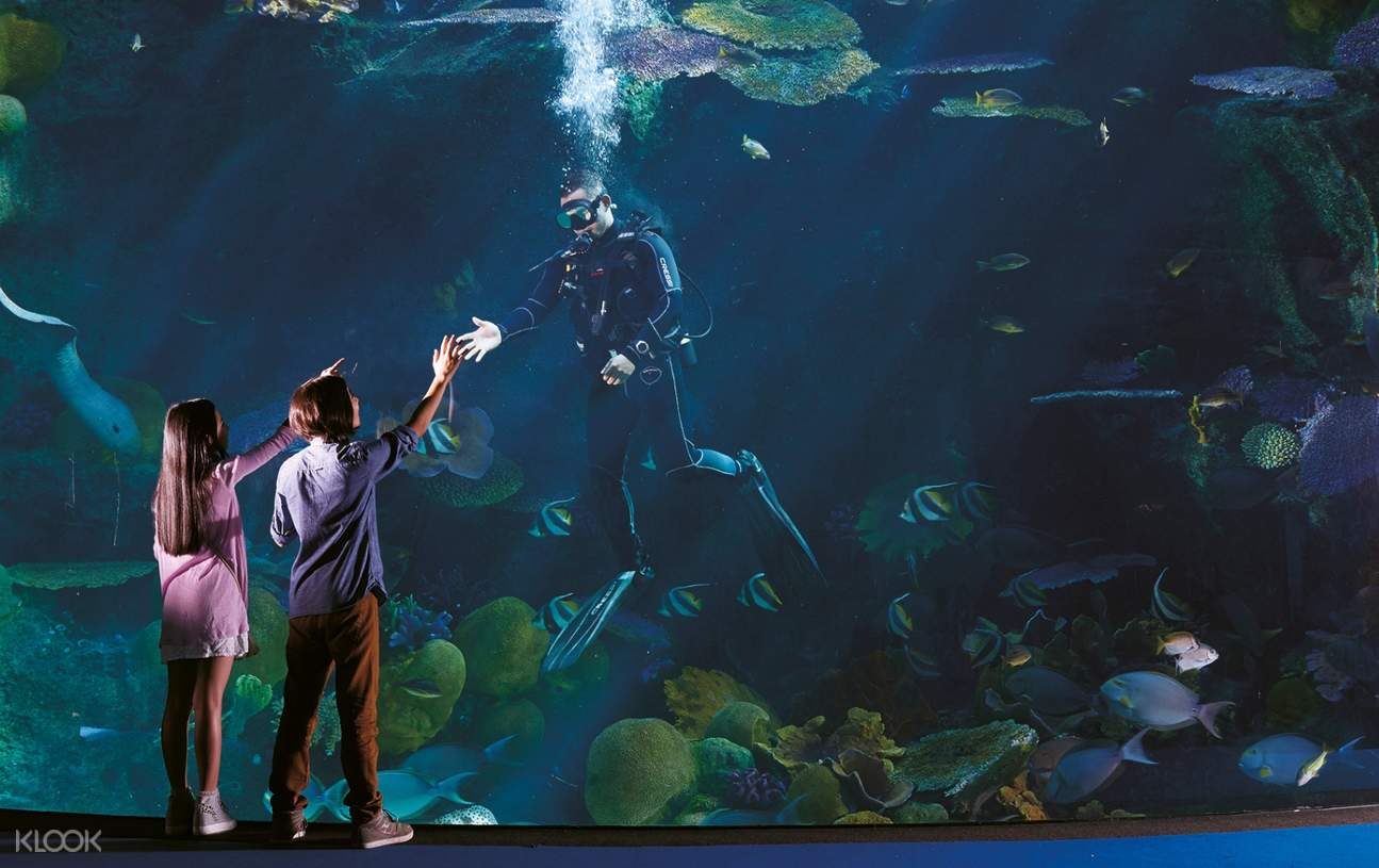 divers feeding fish aquarium windows ocean world