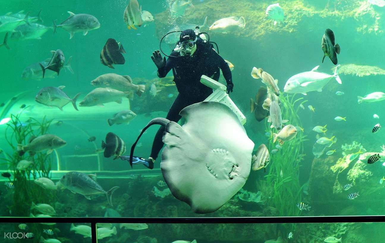 Vinpeal aquarium
