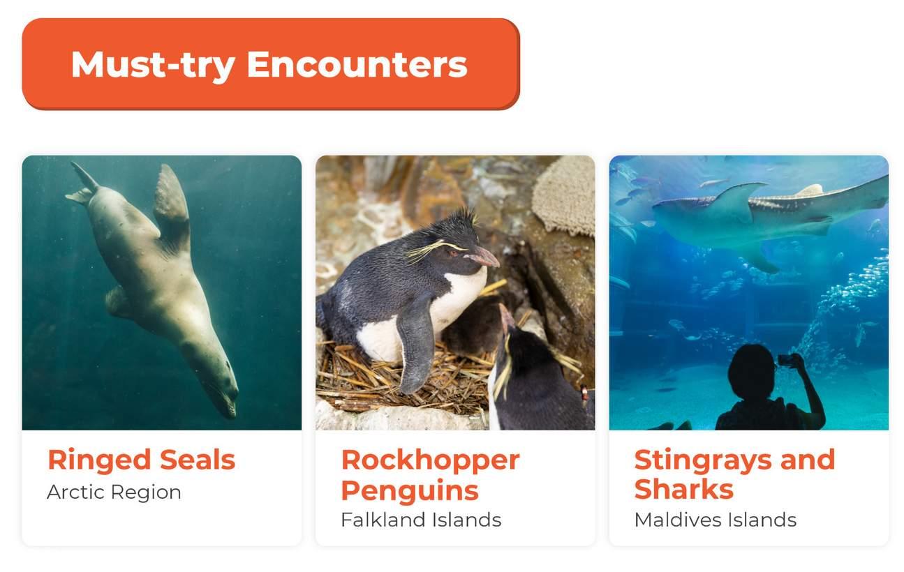 Must try encounters Osaka Aquarium