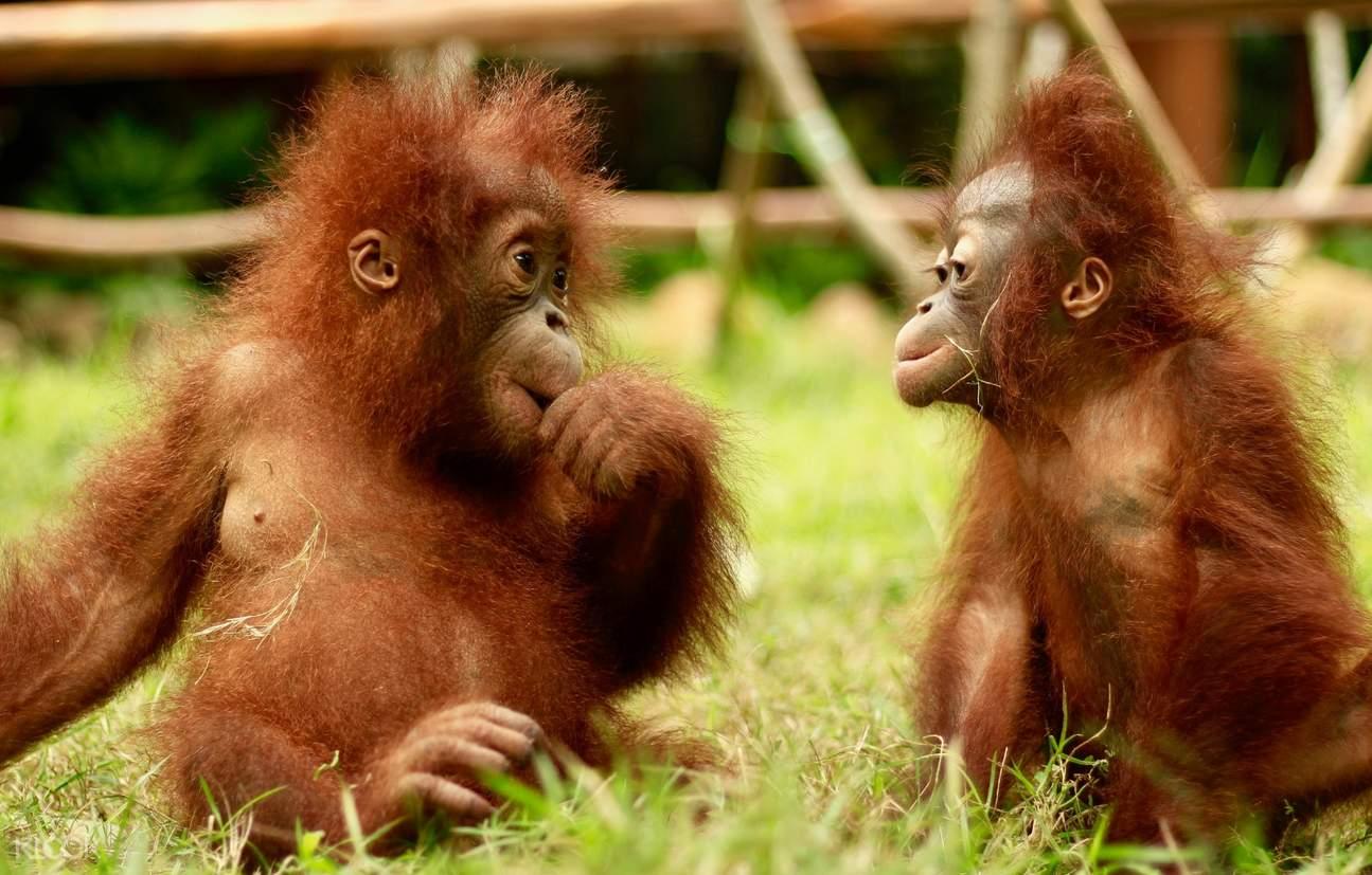 Lombok Wildlife Park Ticket