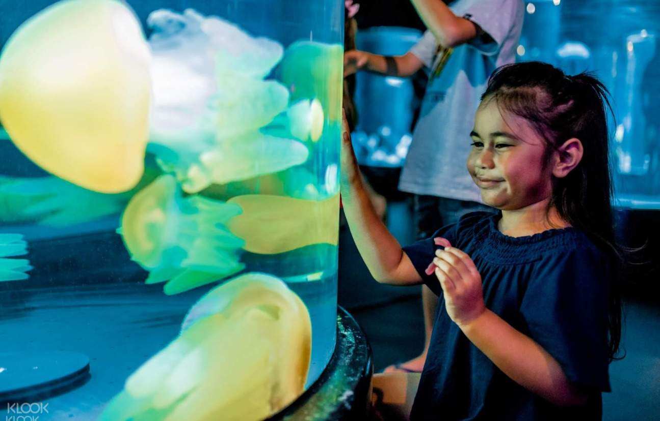 Be mesmerised by the colourful jellyfish at SEA LIFE