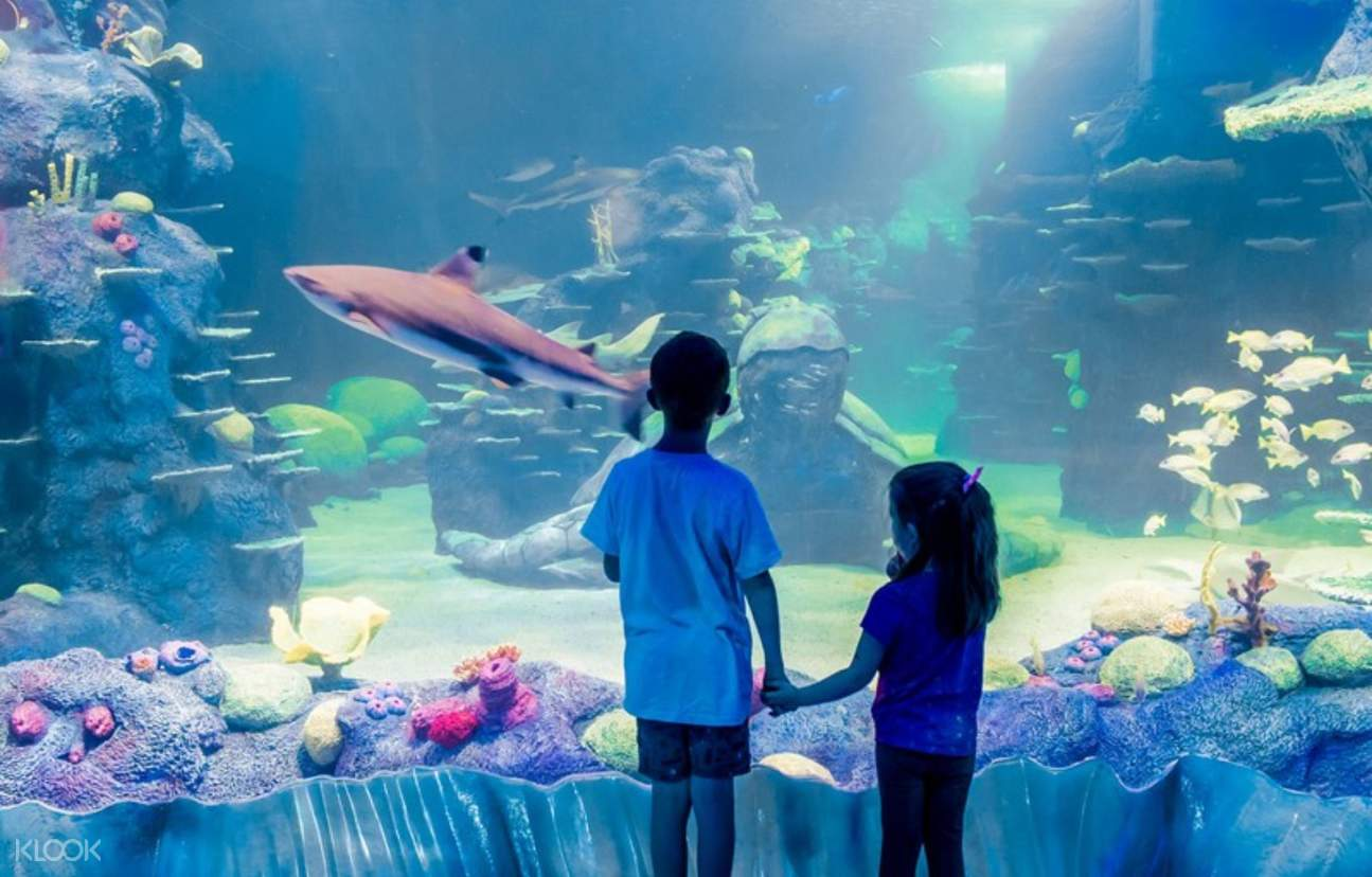 Take the kids to SEA LIFE Sydney for a day out to remember