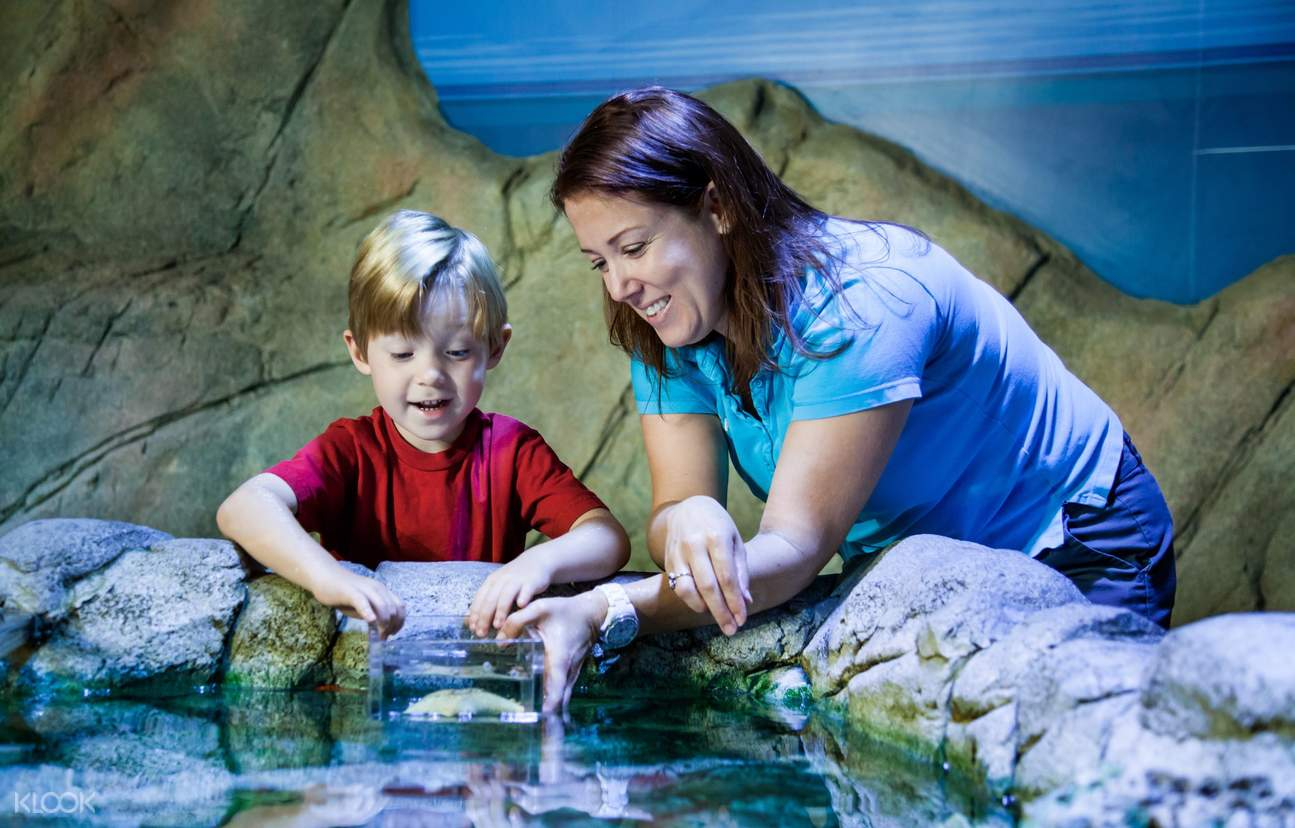 Kids are welcome to get up close with sea creatures