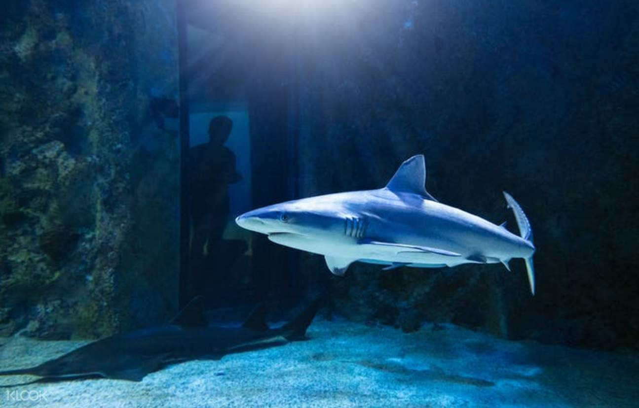 sharks at SEA LIFE Sydney