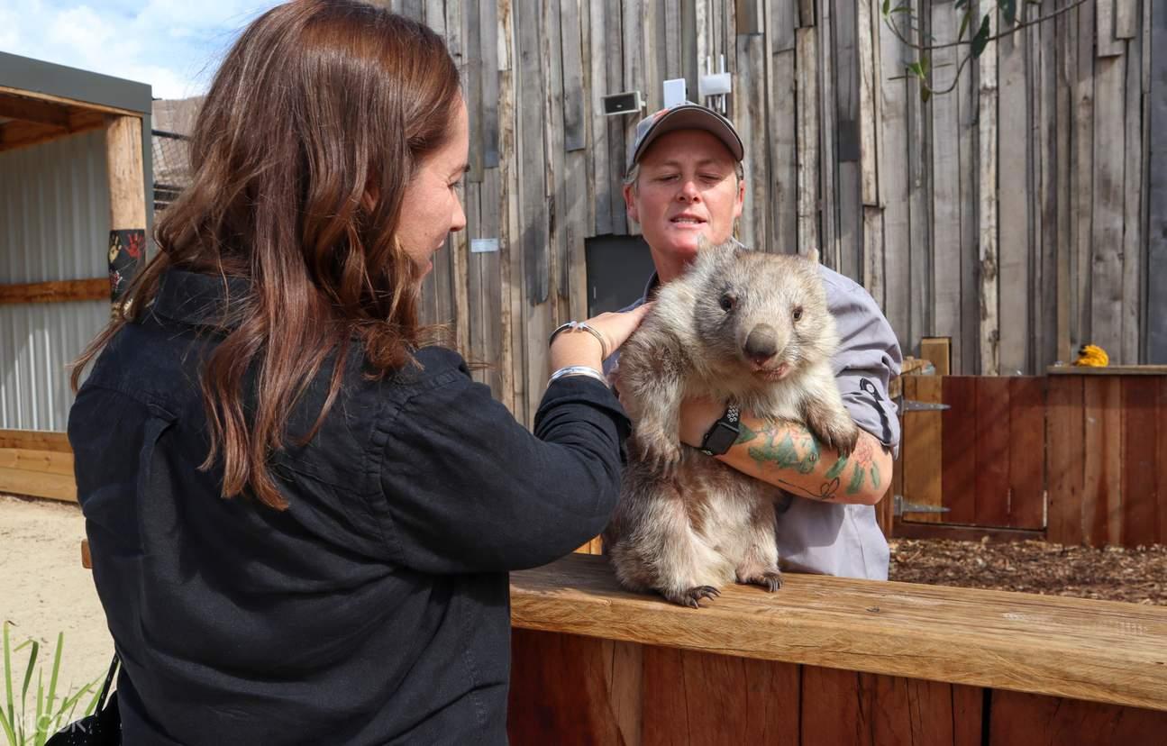 sydney zoo wombat