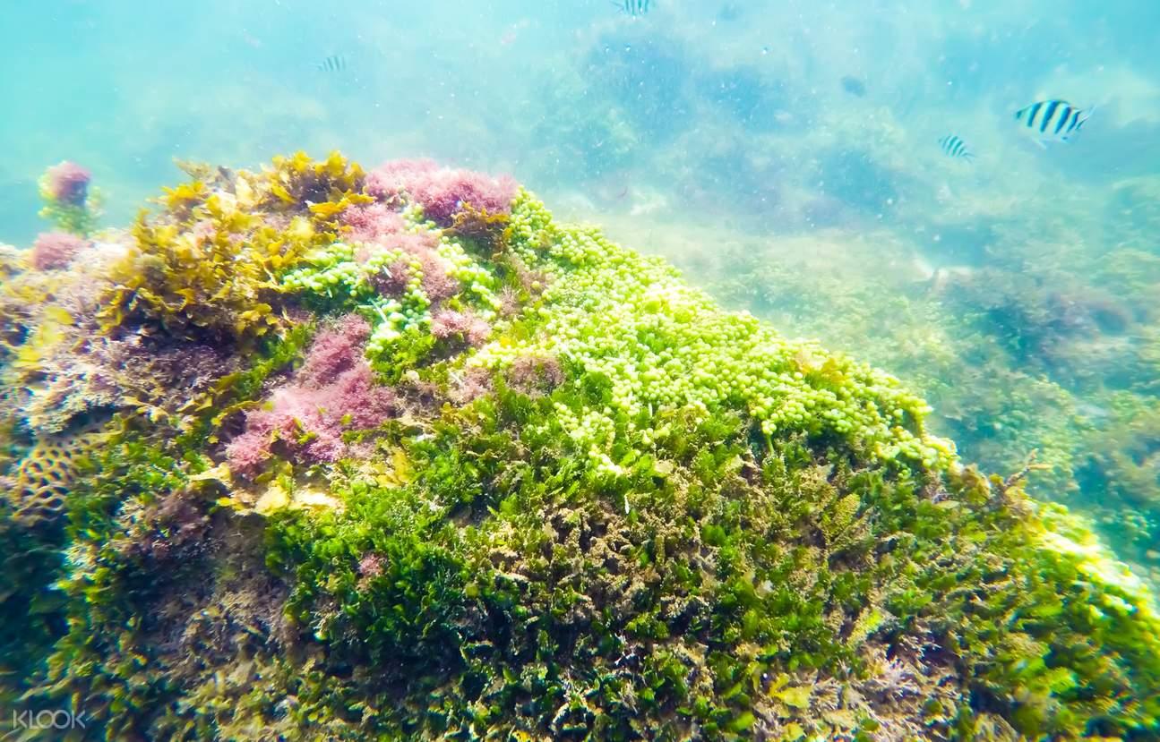 富國島快艇一日遊 - 浮潛