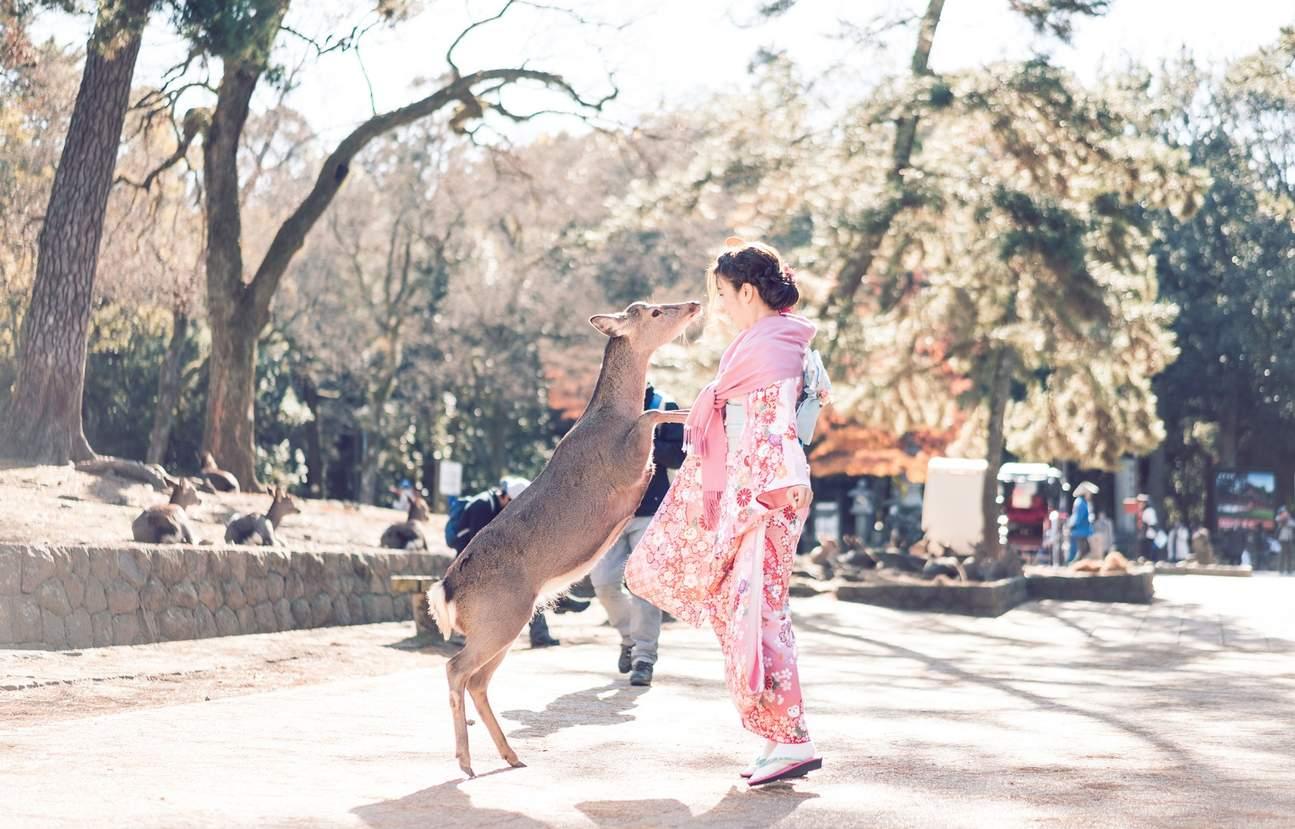 奈良和服体验,奈良喂鹿,奈良和服观光,奈良一日游